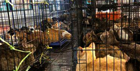 Thailand Police Confiscate High-Priced House Cats in Drug Raid